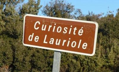 curiositeloriole