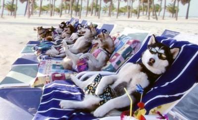 dog-holiday