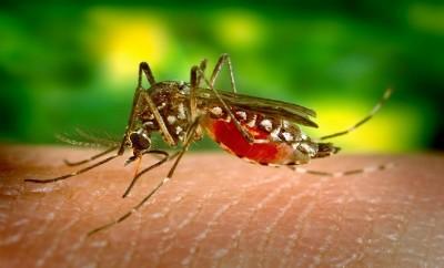 1_mosquito-542156_1920
