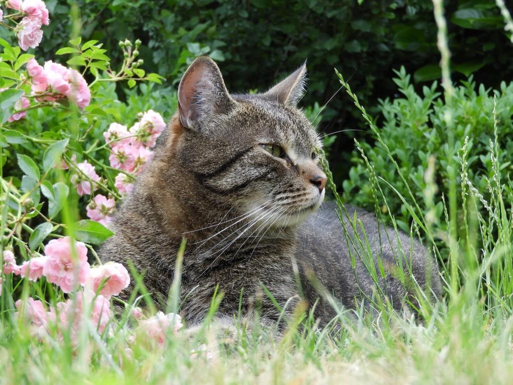 cat-2424384_1920