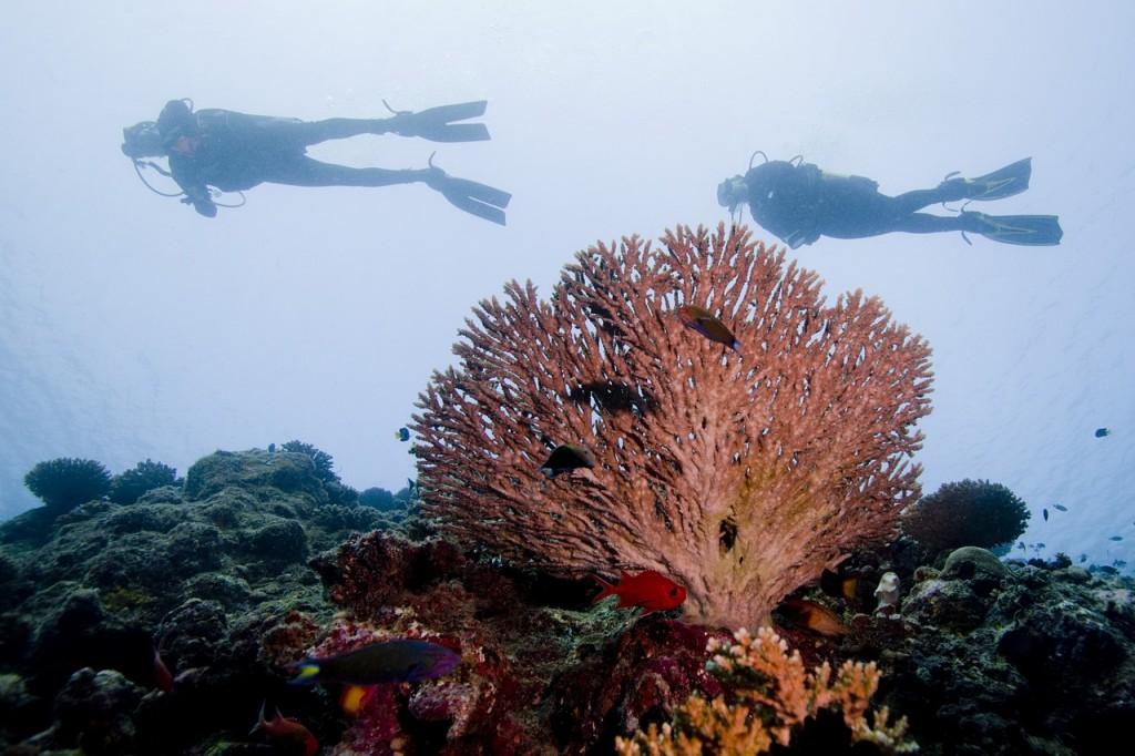 diving-2141017_1280