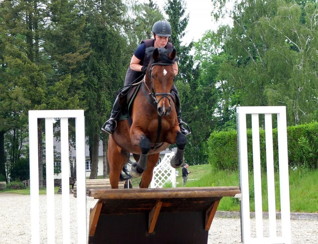 horse-1547248_1920