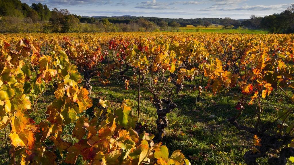 Cépages vignes Hérault