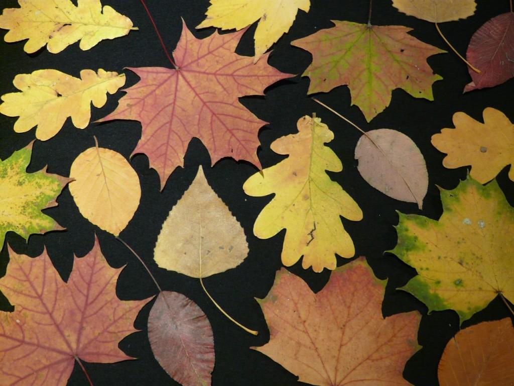 fall-leaves-63222_1280