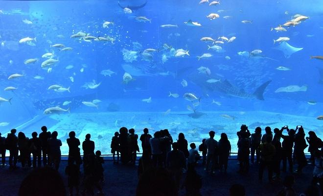 churaumi-aquarium-2407812_1280