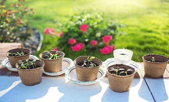 quels l gumes peut on planter ou semer au d but du. Black Bedroom Furniture Sets. Home Design Ideas