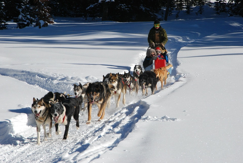 dog-sled-278875_1280