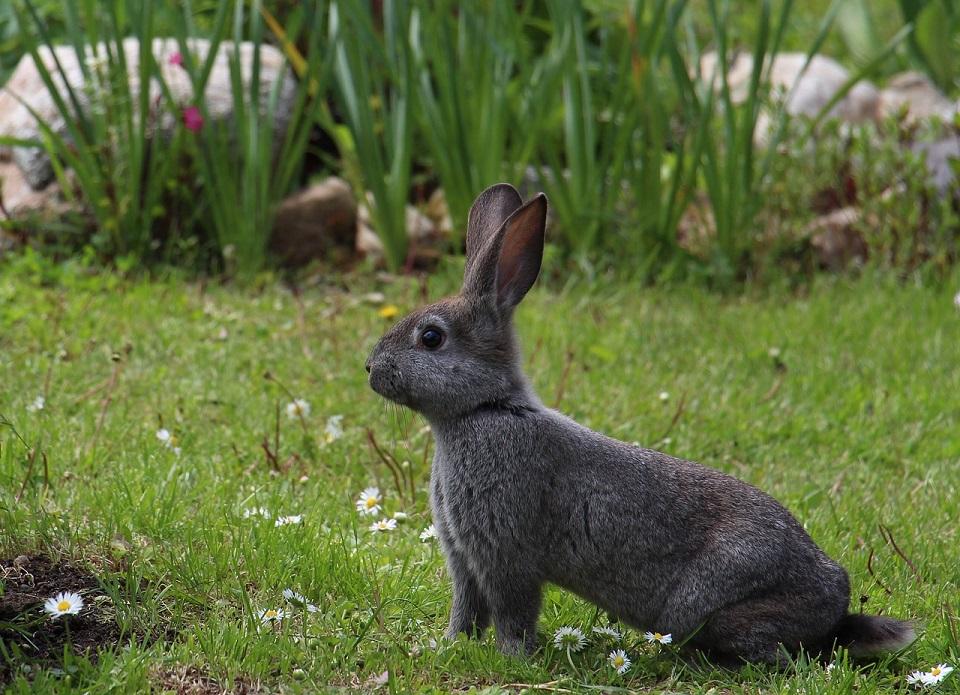 hare-1751616_1280