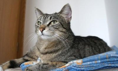 cat-1170556_640