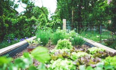 jardineries en ligne