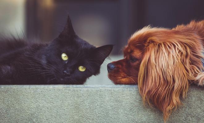 pet sitters a paris