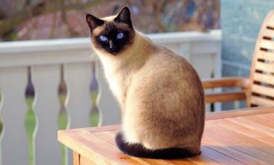 types litière pour chat