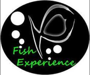 Fish experience - pedicure & massages bien etre