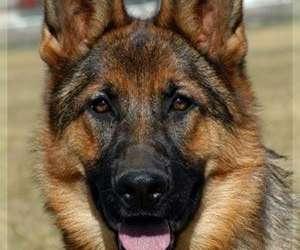 Emulation canine aniche