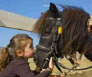 Pony fun espace equestre