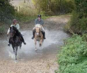 Passion cheval nature