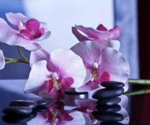 Massages bien-être -  massage assis