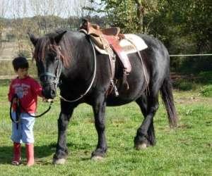 Domaine dilki : promenades a cheval, et a poney