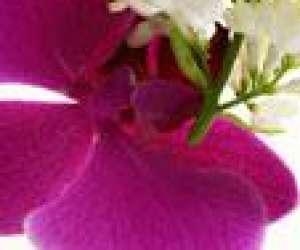 M.b fleurs