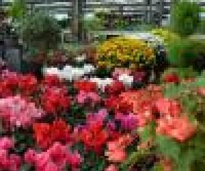 Jardinerie marius ferrat