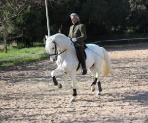 Domaine equestre de st ayulf