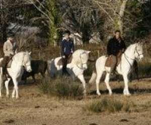 Centre equestre les arnelles en camargue //ffe