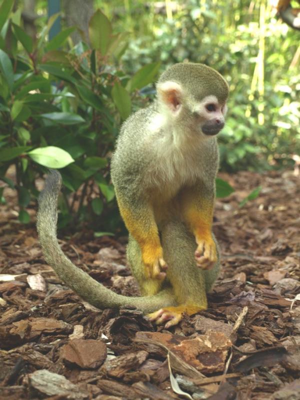 Jardin zoologique tropical la londe les maures 83250 t l phone horaires et avis - Jardin des oiseaux la londe ...