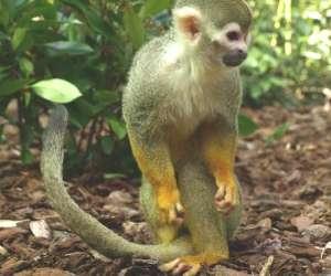 Jardin zoologique tropical