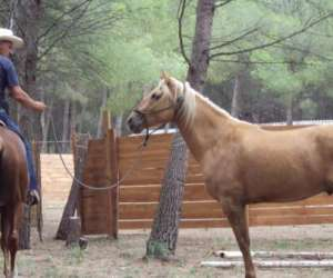 Open ranch les crinieres de la cote bleue