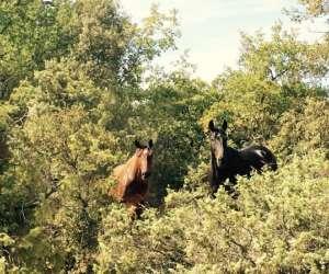 Terres et chevaux
