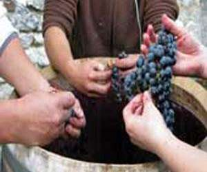 Organic wine tours
