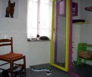 Pension pour chats des monts du lyonnais