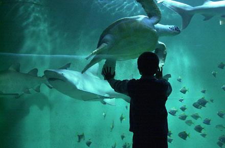 aquarium de lyon 224 la mulatiere 69350 t 233 l 233 phone horaires et avis