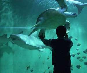 aquarium de lyon 224 la mulatiere adresse avis photos et t 233 l 233 phone