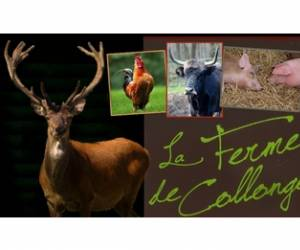 photo La Ferme De Collonge