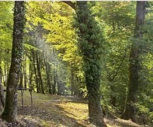 La forêt des bois de ville