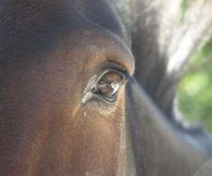 Le cheval et vous, de coeur à coeur
