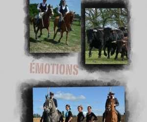 Chevaux toros emotions repas spectacle