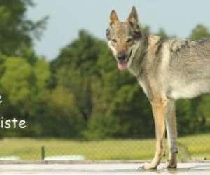 Educateur canin comportementaliste landes