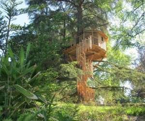 Le temps suspendu - cabanes dans les arbres
