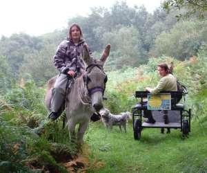 Centre tourisme  equestre