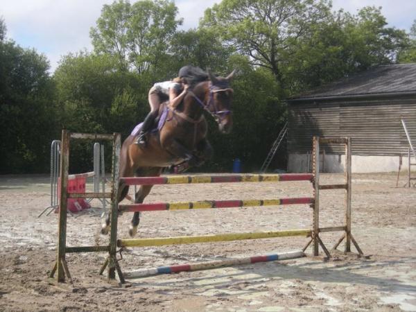 Centre equestre deauville st gatien st gatien des bois Horaires piscine deauville