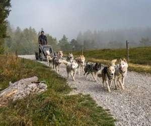 Moment nordique activités chiens de traîneau