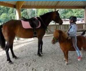 Aiseph poney club st malo