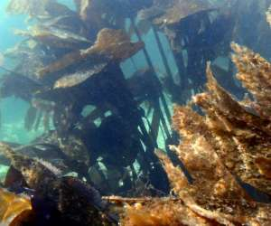 Ecole de plongee de plougasnou