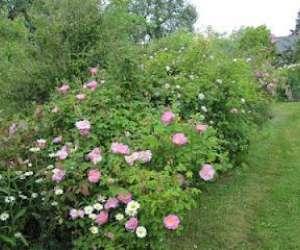 Jardins de kerusten