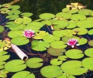 Méditation de la pleine conscience