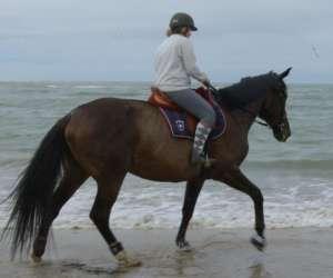 Les  ecuries de  iorga   -  centre equestre