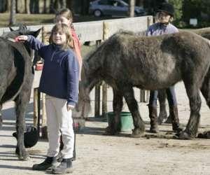 Centre equestre des boulingrins