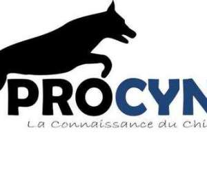 Procyno